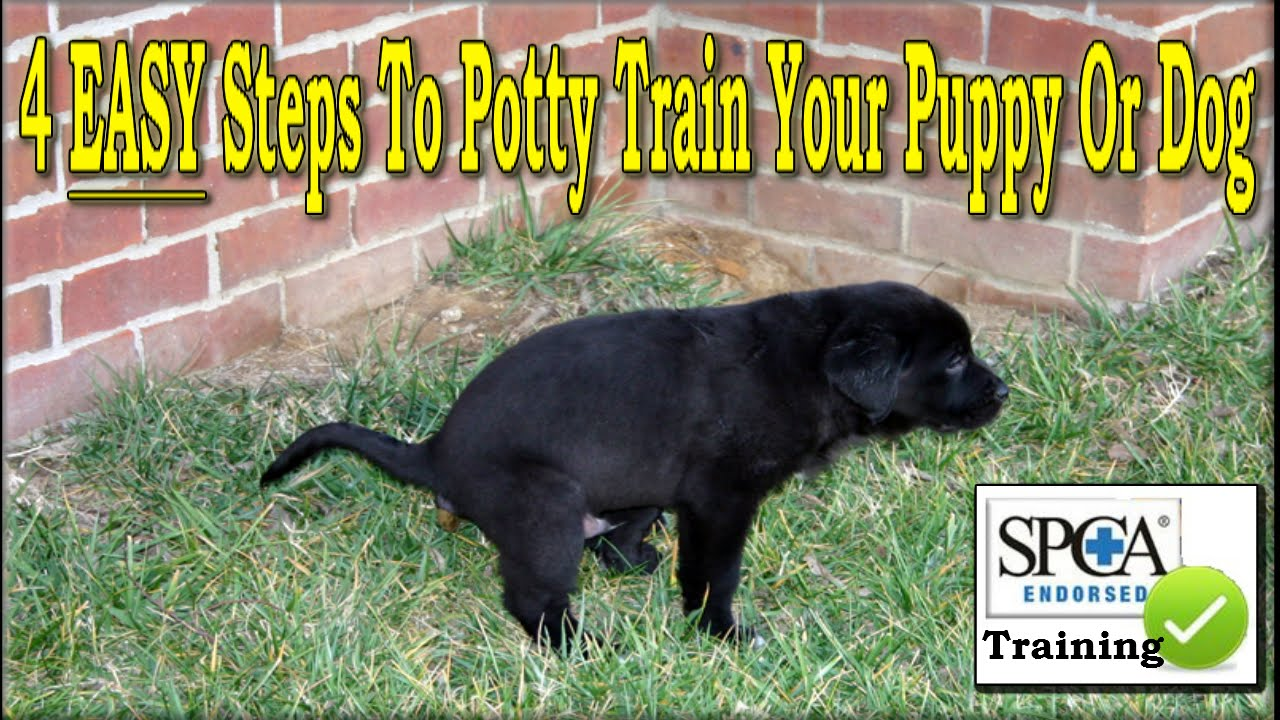 how to train a puppy to poop