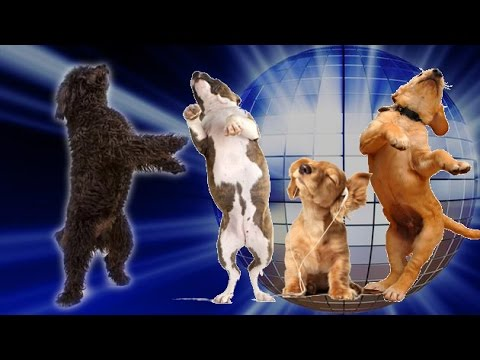 Dancing Archives Page 4 Of 4 Cute Puppies Videos