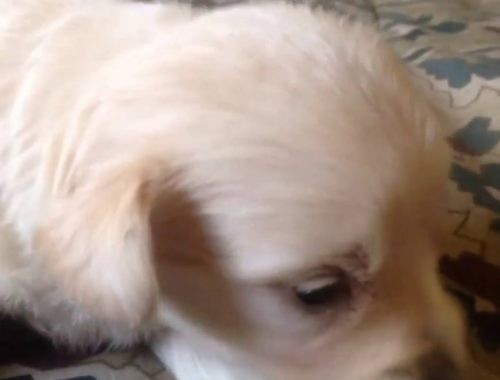 Dog Bless You Puppy Cam