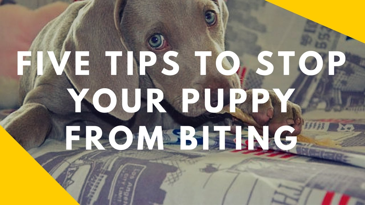 How To Stop A Dog Mouthing