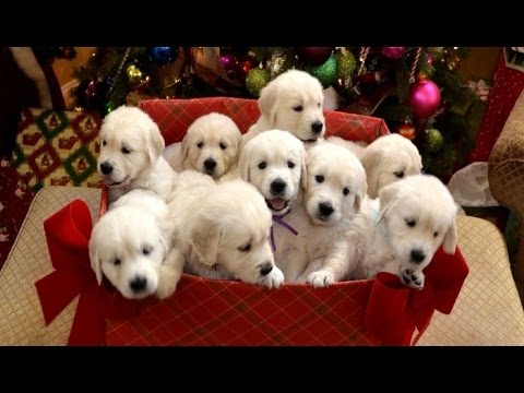 Puppy surprise christmas