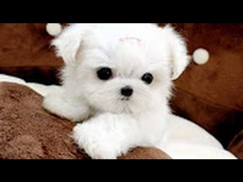 Cute Dogs | Cutest Dog in The World | Cute White Puppies ...