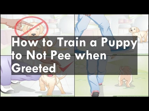 How to train a puppy to not pee when greeted cute for How to train your dog to pee