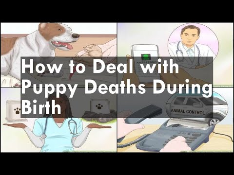 How to Deal with Puppy Deaths During Birth