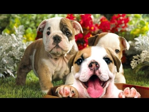 Best CUTE DOGS and FUNNY PUPPIES