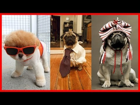Cutest Puppies In The World Archives Cute Puppies Videos