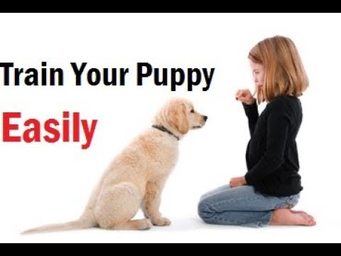 How Do I Train My Dog To Poop Outside