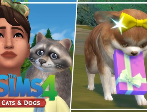 lilsimsie Archives - Cute Puppies Videos