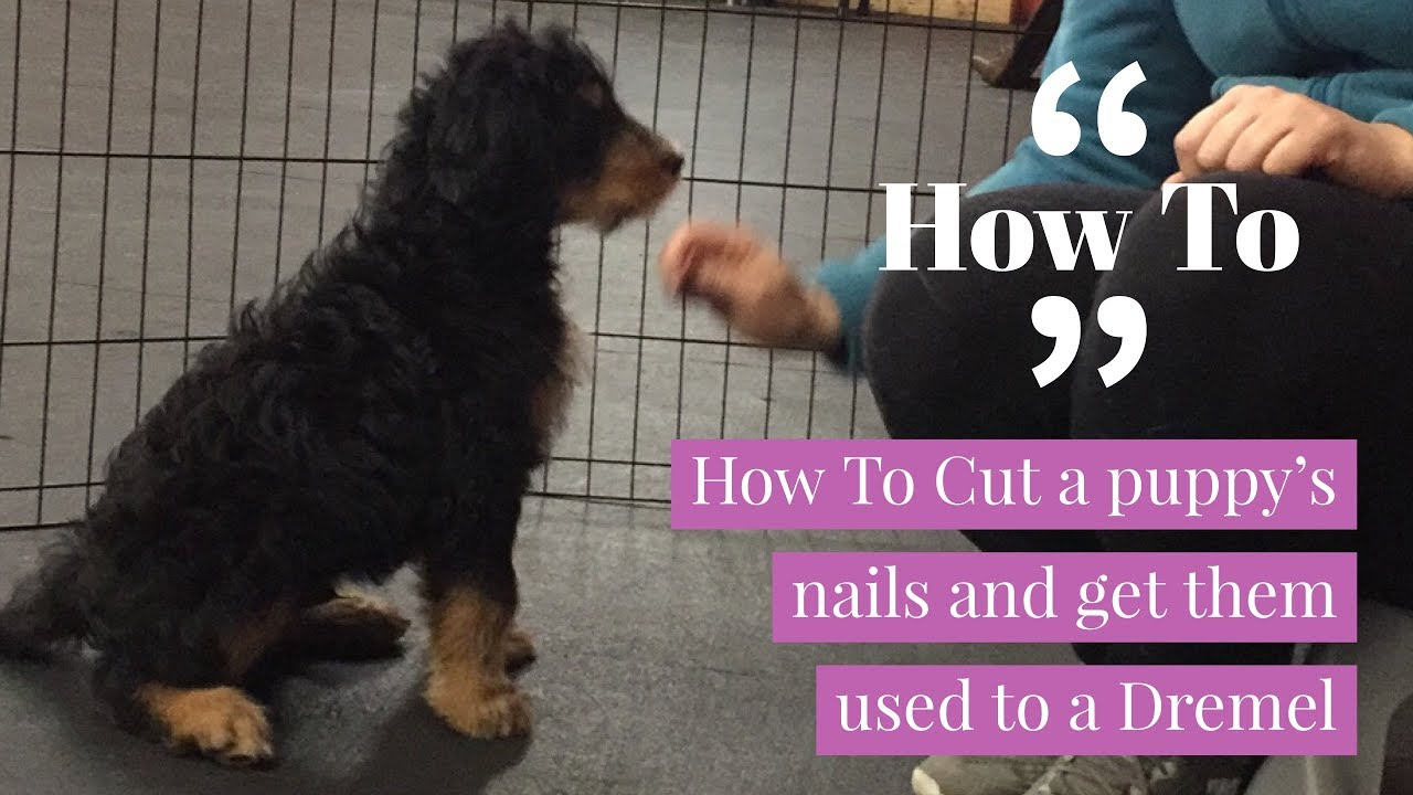how to cut puppy nails at home