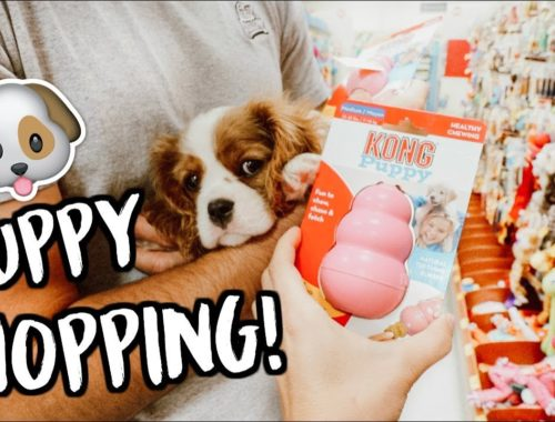 Puppy Haul Archives Cute Puppies Videos